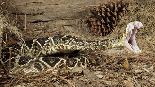snake-41.jpg